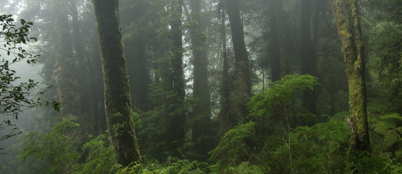 A Refuge for Biodiversity