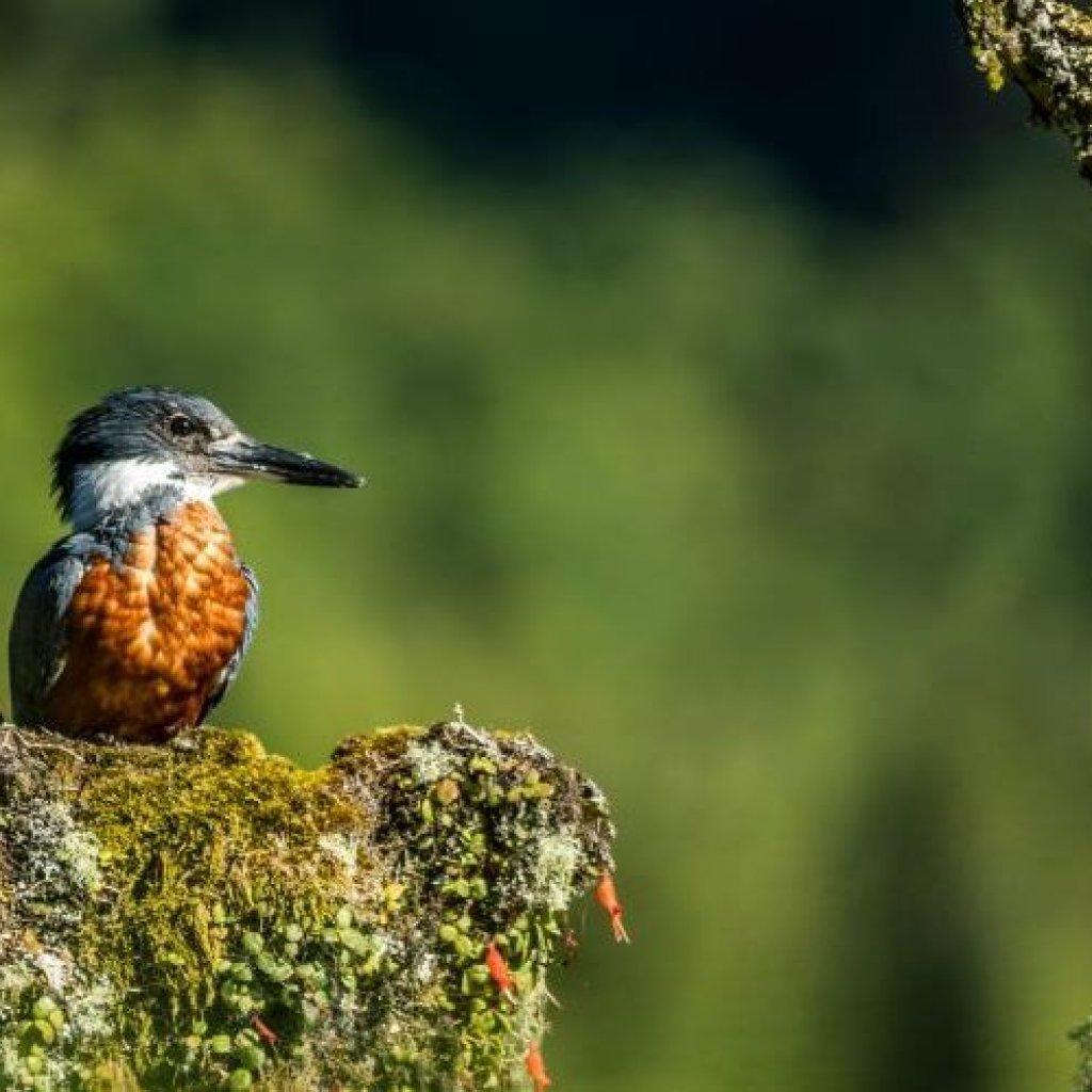 pájaro de la Patagonia