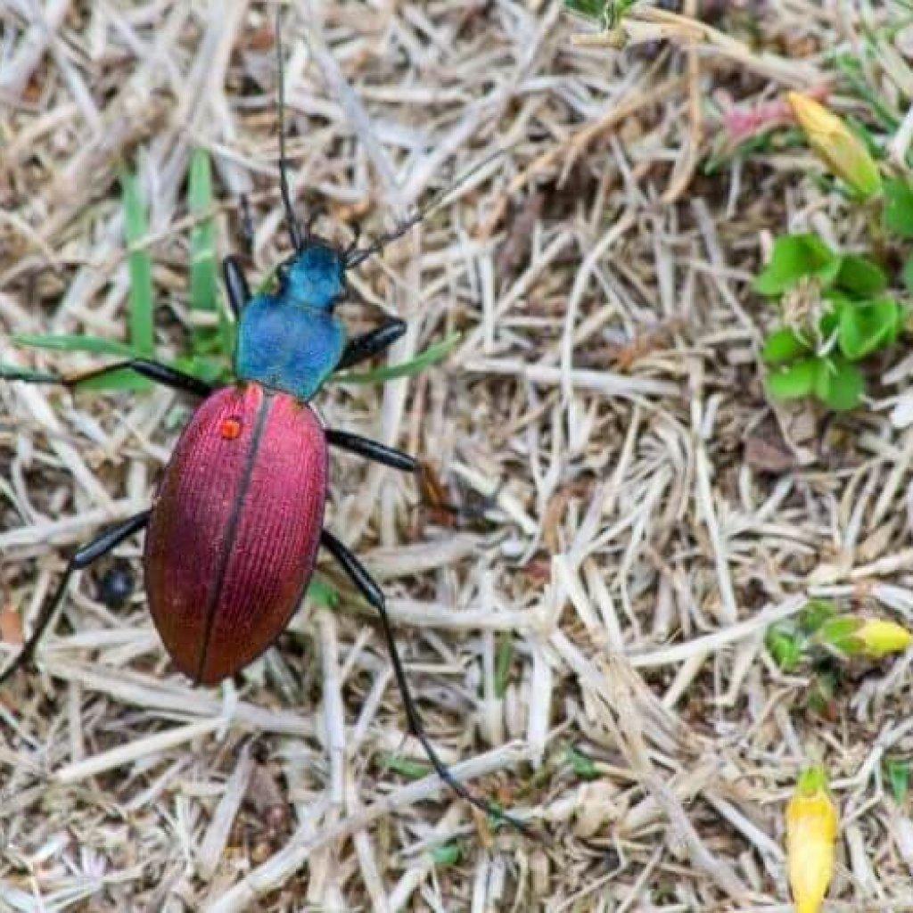 Insectos de la Patagonia