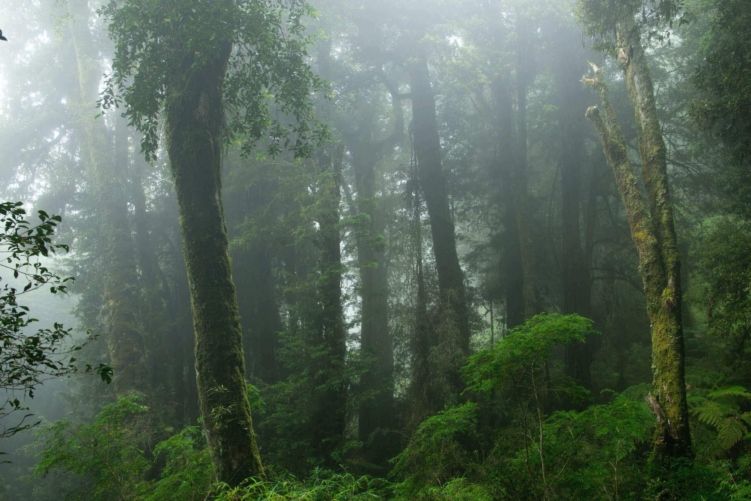 Un Refugio de Biodiversidad